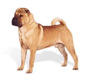 Собаки 40-50 см в холке